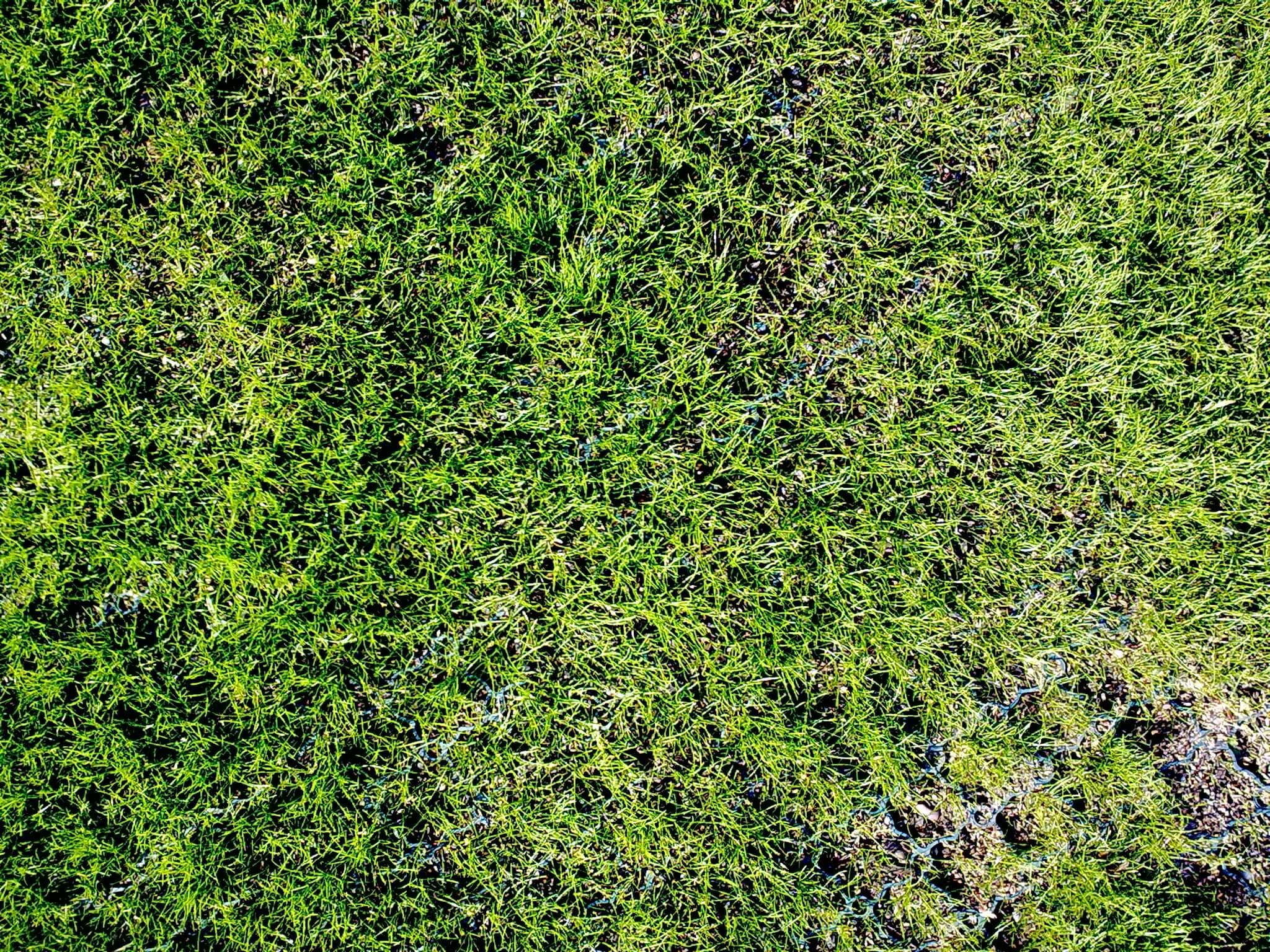 Reinforced Grass